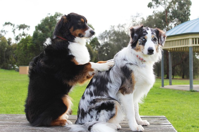 dogs doing sensual massage therapy