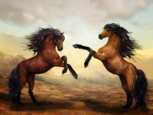 horses - women are wild